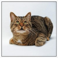 For you cat lovers.  Nice pictures of cats.