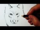 Comment dessiner un loup - Croquis FaceProfil [Tuto]