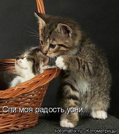 http://cs305813.userapi.com/u968029/-14/x_fa1f9125.jpg