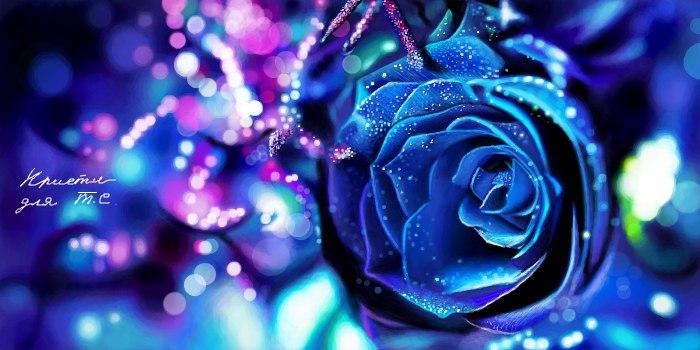 Живое граффити розы