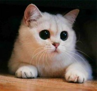 Кофе мой друг.  Опубликовал.  Кот с выразительными глазами.  F uck off.