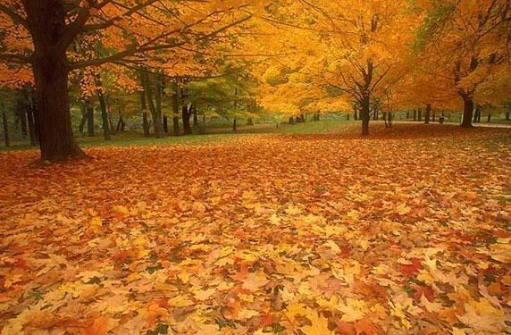 Статуси про осінь
