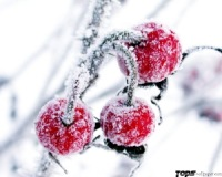 Вишня Зимняя, 22 февраля 1974, Киев, id175829418