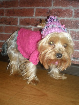 Вязаная одежда для собак и их