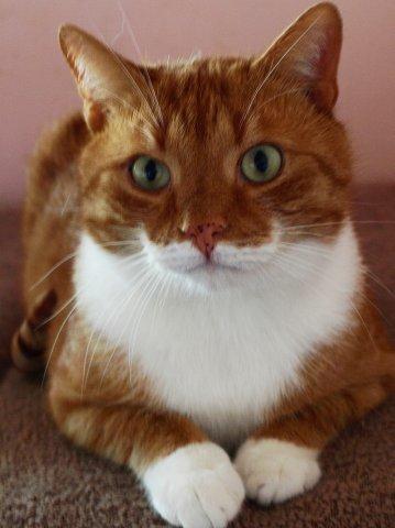 котики рыжие фото