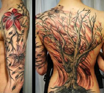 фото дерева явор