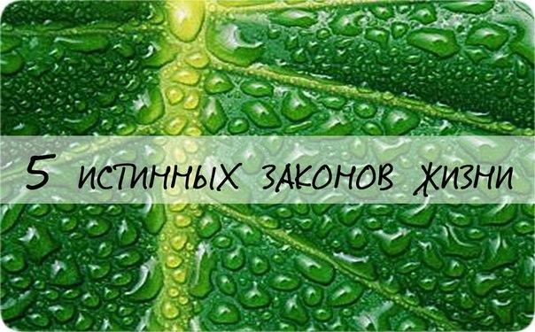 http://cs307104.vk.me/v307104954/90b2/xK8PVM8JucA.jpg