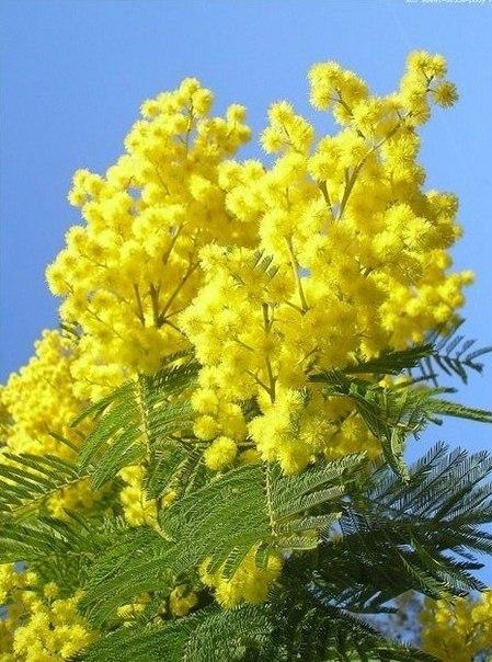 Приятный желтый цвет!