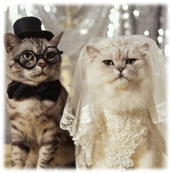 9 лет свадьбы какая: