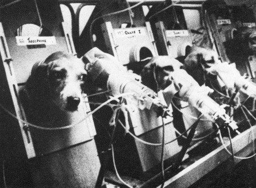 animal testing thesis