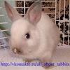 Мир Кроликов!