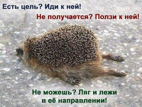 http://cs307113.vk.me/v307113447/8f43/v3X4iMBmbVo.jpg