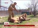 У Білогірському сафарі парку левів випустили на волю