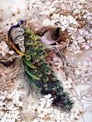 Скачать бесплатно картинку на телефон Животные, Павлины, Птицы, Рисунки.