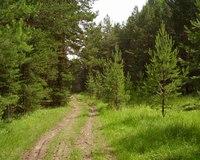"""...настройку программа  """"АВЕРС: Управление лесным фондом ПРОФ """". Специалисты обучились работать в этой программе..."""