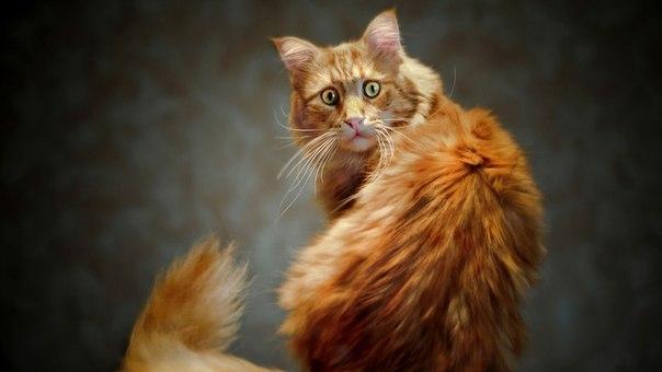 Рижий Кіт шокований