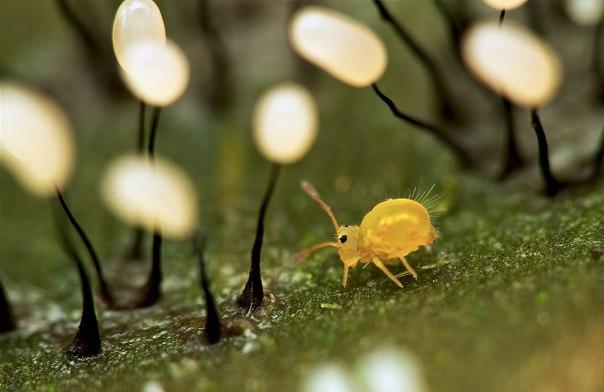 Маленькая коровка в лесу гигантских фонарей.