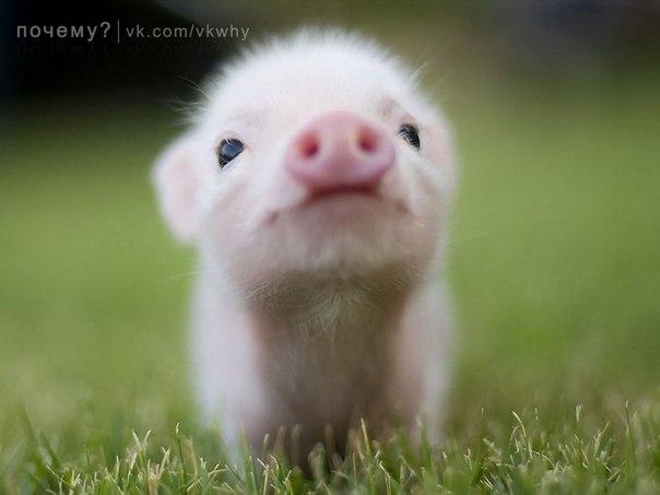 Красивые фотографии с маленькими животными.