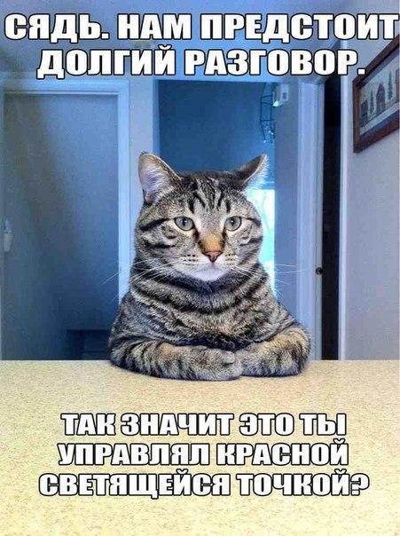 Привет мой любимый кот