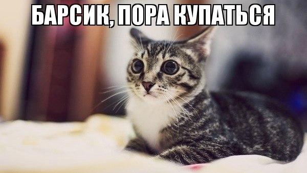 приколы с собаками фото: