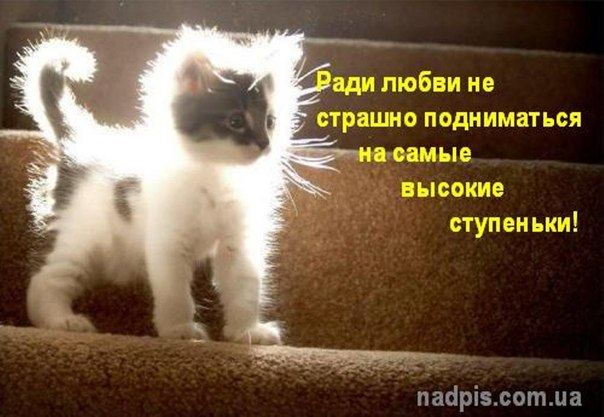 http://cs307308.vk.me/v307308577/508a/F-BHGnAuMNE.jpg