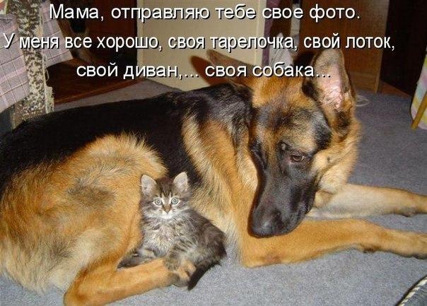 ♥Собака - лучший друг человека♥