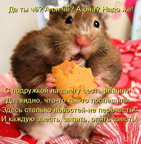 http://cs307411.userapi.com/v307411208/1c97/AjOR2H_PZag.jpg
