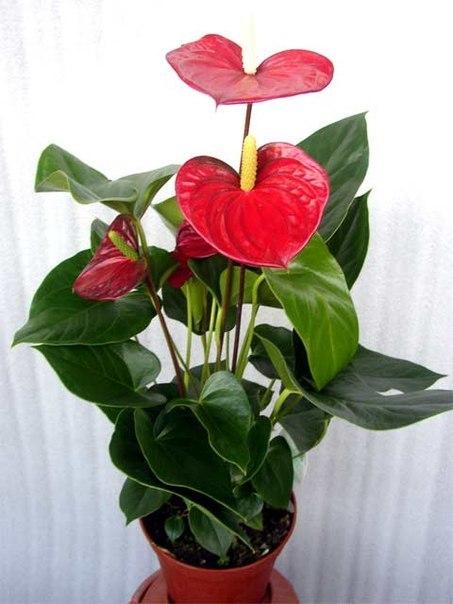 Комнатные цветы под заказ.89503092367 | VK: http://vk.com/club50865983