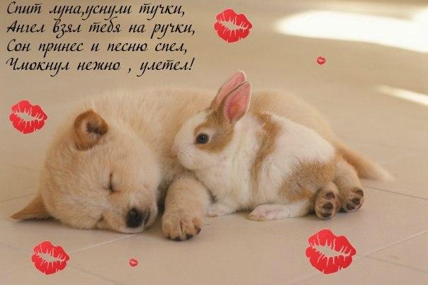 Спокойной ночи мой любимый я люблю тебя очень сильно картинки