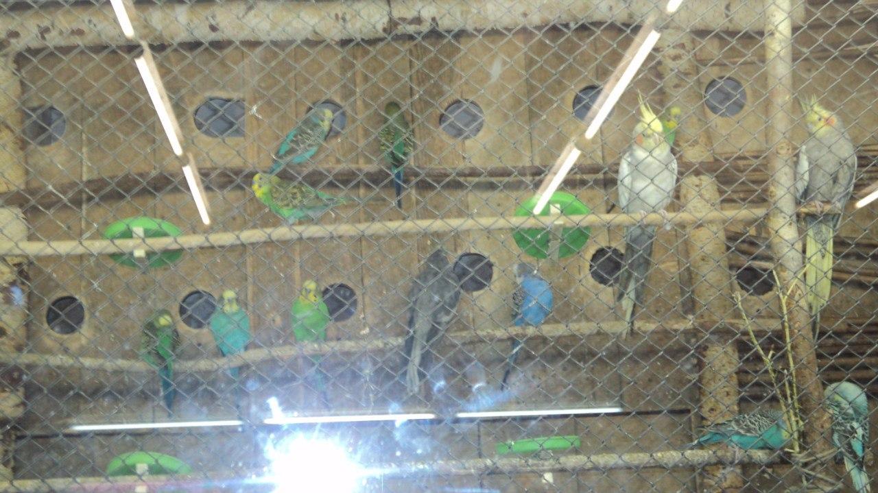 Птицы HPm-Sl5AeVI