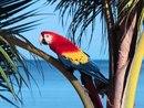 Красные ара - самый красивые виды попугая.  Эта птица - национальный символ Гондураса.