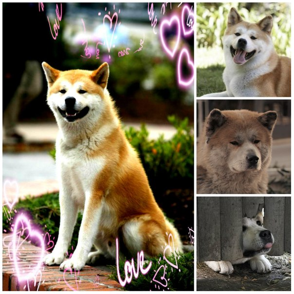 Хатико самый верный друг♥♥♥ updated the
