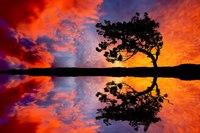 Картинка на рабочий стол вода, дерево, отражение, горизонт 1024 x 600.