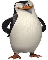 фото пингвин из мадагаскара