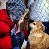 """Приют для бездомных животных """"ГАВ"""""""