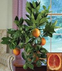Бисероплетение апельсиновое дерево - Делаем фенечки своими руками.