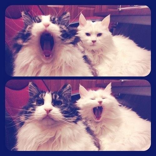 Всем большое мяу...  Чуть не забыла, сегодня же День Кошек.  Он хоть и неофициальный, но все-таки кошачий...