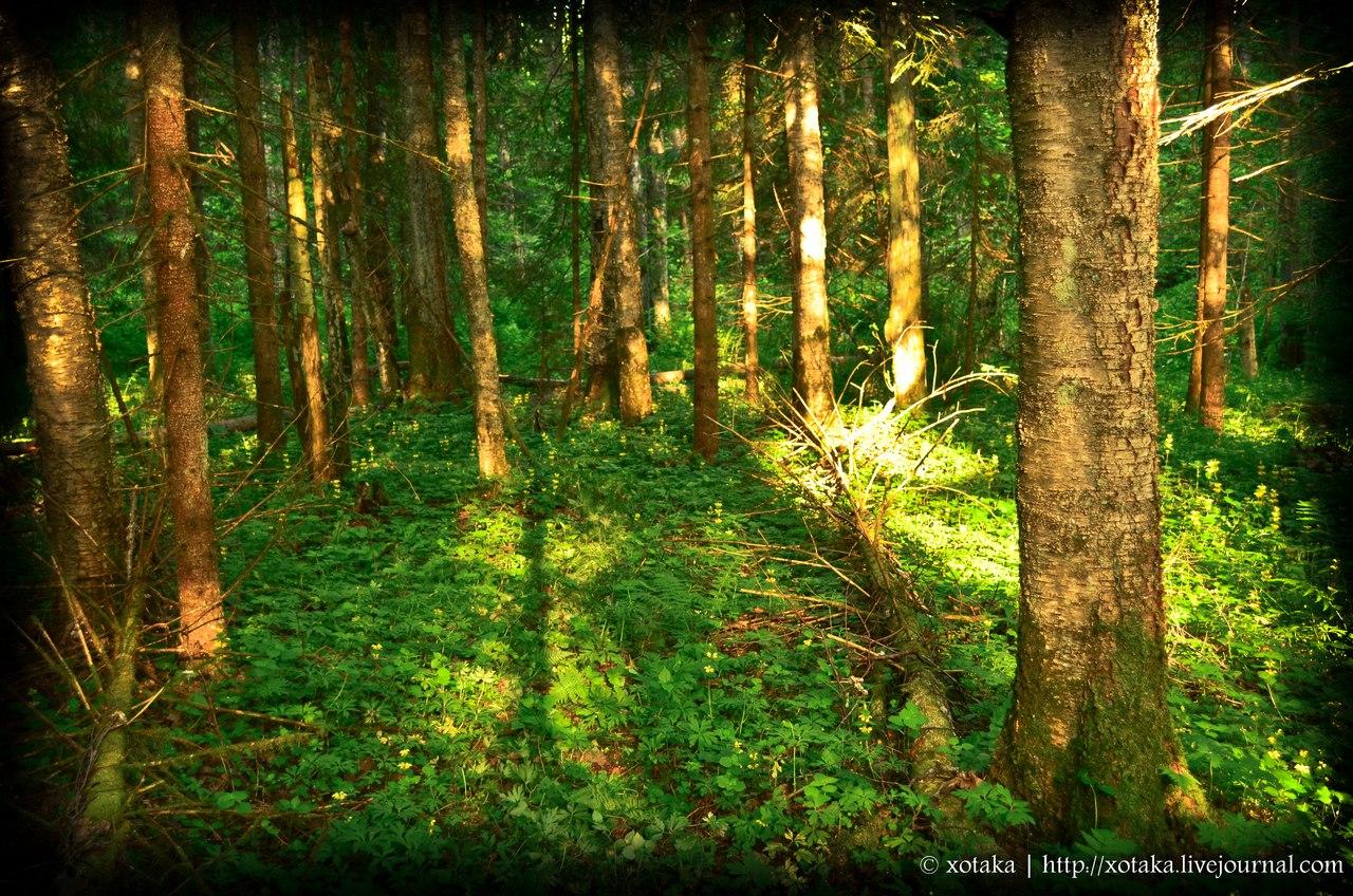 Фото раздетых девочек в лесу бесплатно 28 фотография