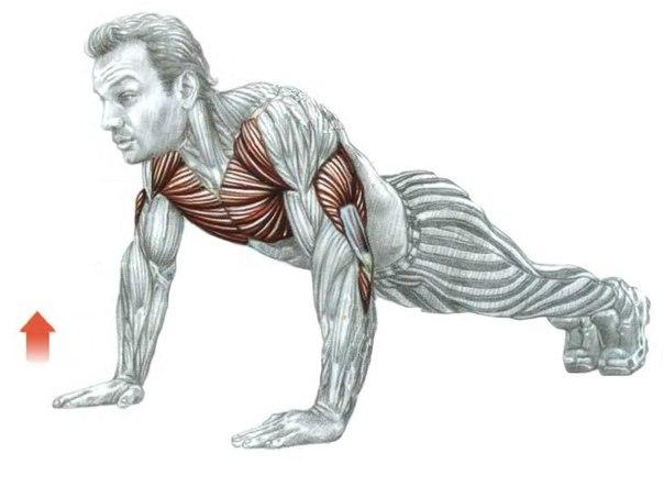 Мышцы болезни как накачать мышцы дома