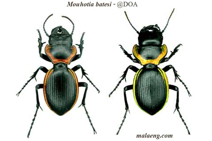 фото красивые жуки