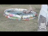 Puppy inches around a kiddie pool to avoid getting her butt wet