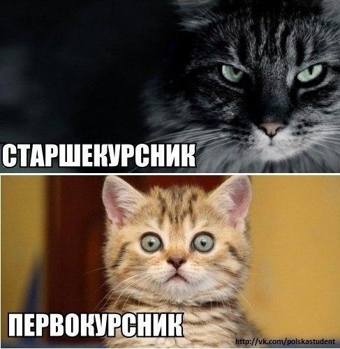 Хиханьки да хаханьки - Страница 3 HzfMwJKiY_k