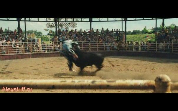 поединок с быком в Живой стали
