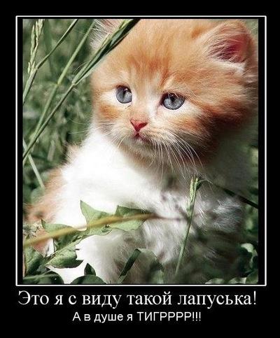 Павел Литвинов, 8 июля , Киев, id181871758
