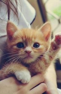 Весёлый кот фото