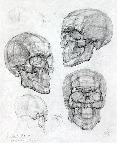академически рисунок черепа николая ли