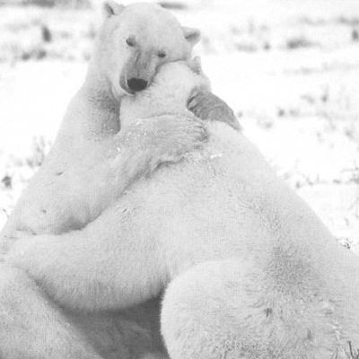 Белый-Медведь Носорог, Москва, id220047809