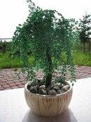 Схемы плетения деревьев из бисера Блог Малковой Юлии.