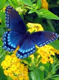 Картинки бабочки природа