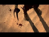 Shadow of the Beast (PS4) — Дебютный трейлер | Gamescom 2013